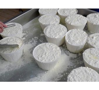 Fabrication: Ricotta